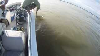 preview picture of video 'Pescaria de Dourado Argentina Ita Ibaté 2012'