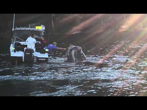hqdefault - Una ballena se acerca a un barco de pescadores para que le quiten un plastico que tiene en la boca