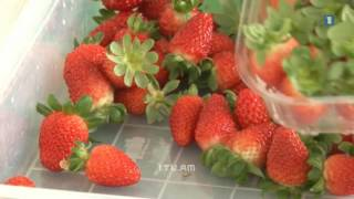 27 05 2016 1tv Armenia. At the Square. Sweetberry greenhouse.