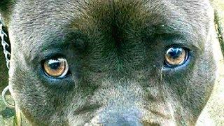 Хозяин ОСТАВИЛ собаку у грумера, но так и НЕ ВЕРНУЛСЯ за ней...