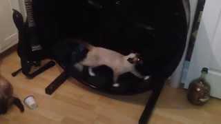 Смотреть онлайн Тренировочное колесо для кошек