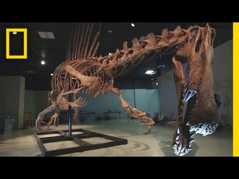 Bigger Than T. rex: Spinosaurus | National Geographic thumbnail
