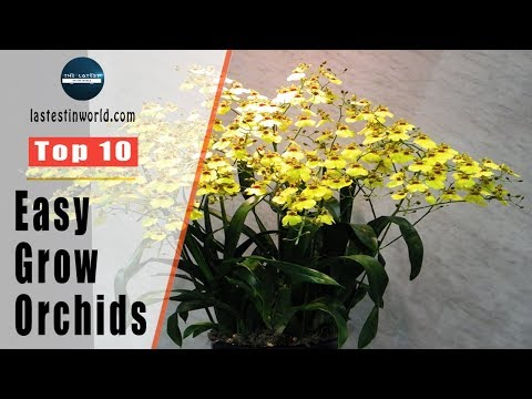 Top 10 Easy To Grow Orchids - Orchid Care For Beginners