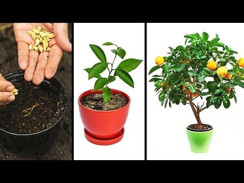 15 Plantas Que Puedes Cultivar Cómodamente En Tu Hogar