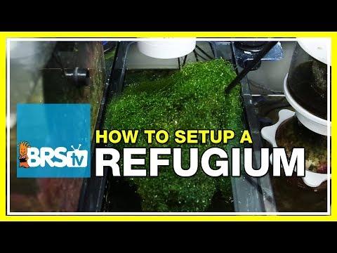Week 27: Refugiums - Utilizing algae for a thriving reef tank | 52 Weeks of Reefing #BRS160