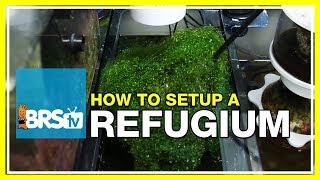 Week 27: Refugiums - Utilizing algae for a thriving reef tank | 52 Weeks of Reefing #BRS160