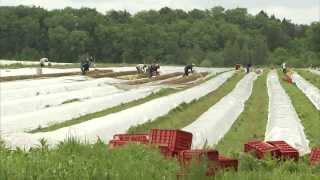 preview picture of video 'Landwirtschaft in Bayern: Landkreis Neuburg a.d. Donau in Oberbayern'