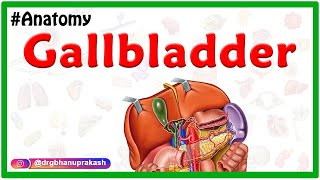 Gross Anatomy of Gallbladder: Composition, Structure, Blood supply  and Nerve supply