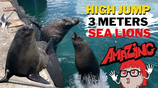 Seal - Sea Lion Amazing 3 Meters High Jump to the Harbour Dock #Shorts