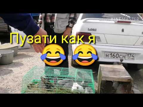 Гуся индюки 🦆  🦆 кролики курица 🐔 🦆 утки много чего