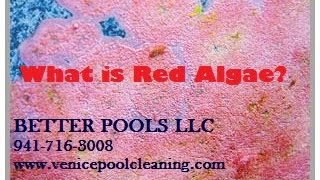 What is Red Algae