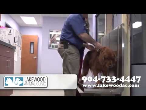 Lakewood Animal Clinic | Veterinary Services in Jacksonville