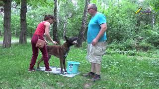 Обучение дрессировке собак, с помощью Фокса, команда место