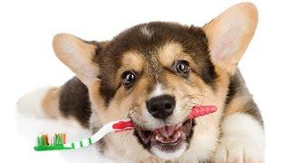 Полезные советы владельцам собак