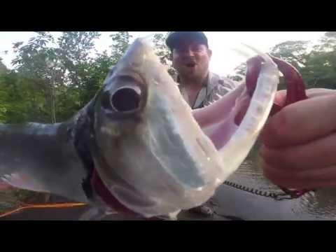 GEOBASS Season 2: Peacock Bass in Guyana
