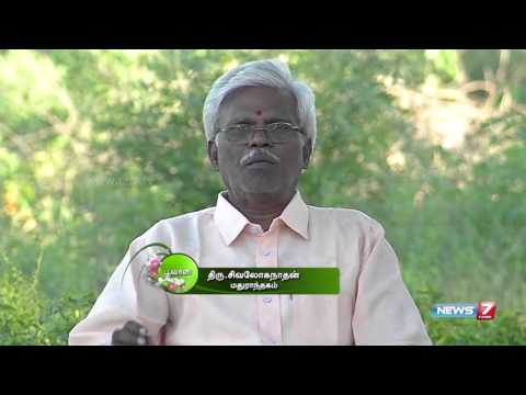 'Nilavembu' is a Natural remedy for Viral fevers   Poovali   News7 Tamil  