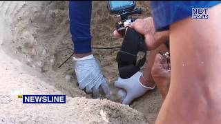 First baby leatherback turtle this year born in Phang Nga