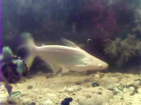 My fish tank ..hular(5)