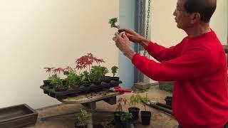 Creating Starter Tree Bonsai