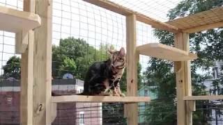 Bengal Catio Enclosure Build