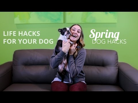 Life Hacks For Your Dog - Rover.com