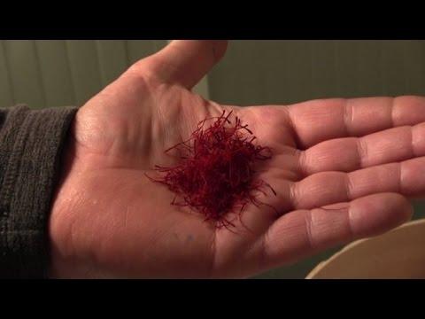 Luso di un seme di lino a perdita di peso