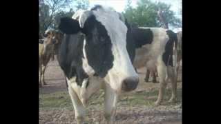 Pollo Cowboy - That'd be Alright - Tributo a Alan Jackson