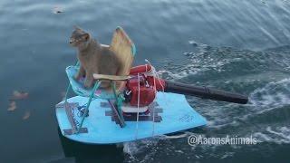 Homemade Jet Ski - Aarons Animals - Video Youtube