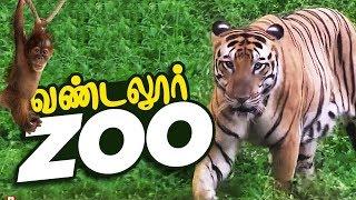 VANDALUR ZOO 2020 | Arignar Anna Zoological Park,Vandalur,Chennai | Chennai ZOO