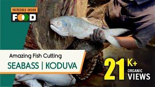 Incredibly Amazing Fish   Koduva Meen   Big Sea Bass Fish