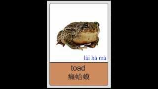 Mandarin Chinese Flashcards - Reptiles and Amphibians I 普通话闪卡 - 爬行与两栖动物