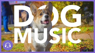 Dog Music: Blissful Sleep Sounds for Dogs (11 HOURS)