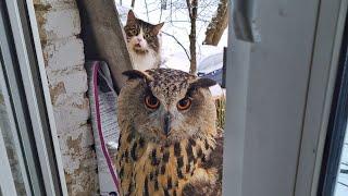 Филин Ёль и кот Мурлок- тонкие отношения. Сова и кот - кто кого троллит? Кто отключил камеру?