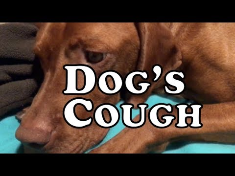Dog's Cough - Dog's Bronquitis - Gagging And Coughing - Dog's Flu