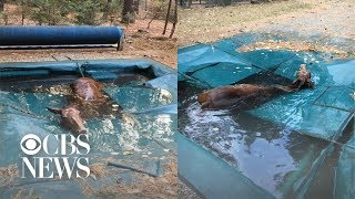 "Horse found ""shivering uncontrollably"" after hiding in pool to survive California wildfires"
