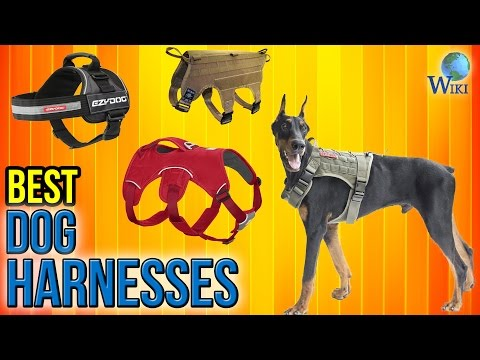 9 Best Dog Harnesses 2017
