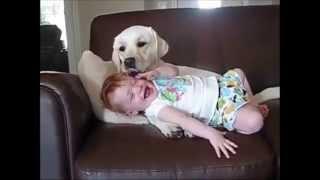สุนัขแสนรู้ กับเด็ก รวมคลิป น่ารักๆ Bayby And Dog - dooclip.me