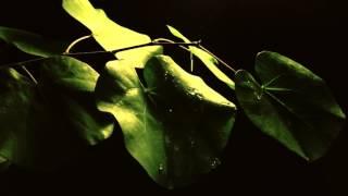 Özgür Yılmaz - Şelale (Official Video)