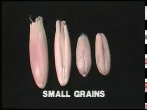 Giardia parasito sa lalake