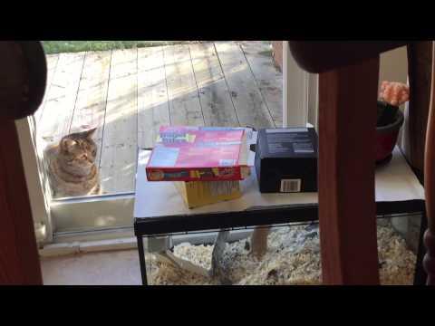 Oblivious gerbil and a cat.