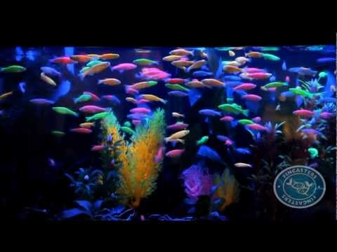 Blue fluorescent bulb yahoo answers for 10 fish in a tank riddle