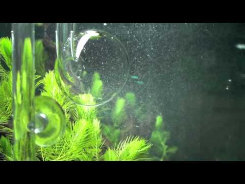 Green Leaf Aquariums Atomic Diffuser's