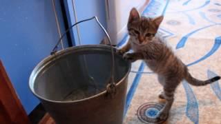 Кот бочка с водой