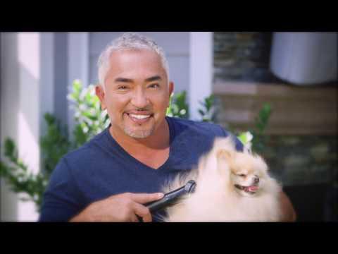 B-Air Fido Max 1 Dog Dryer - Purple Video