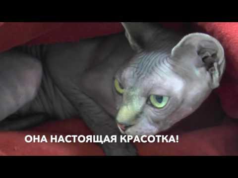 Эндометрит у кошки