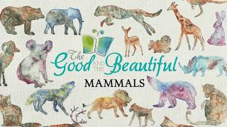 Mammals | Facts About Mammals | The Good And The Beautiful