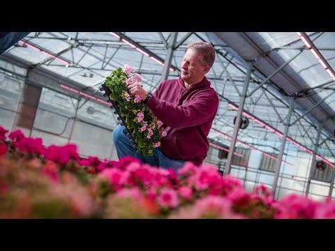 Philips LED Top Lighting - Kalamazoo Specialty Plants thumbnail