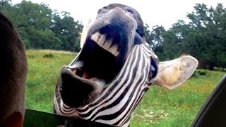 TRY NOT TO LAUGH CUTE FUNNY ANIMALS!