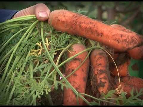 Во саду ли, в огороде. Выпуск 25 сентября