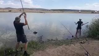Как ловить карпа в саратовской области